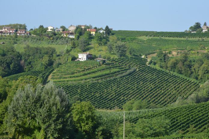 prosecco vineyard